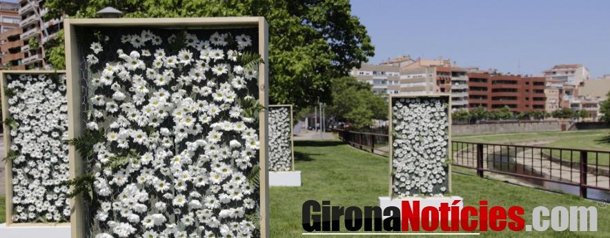 alt - L'Ajuntament de Girona donarà part de les flors i les plantes de Temps de Flors als equipaments sanitaris com a reconeixement